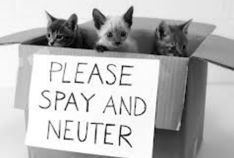 Spay And Neuter Near Me