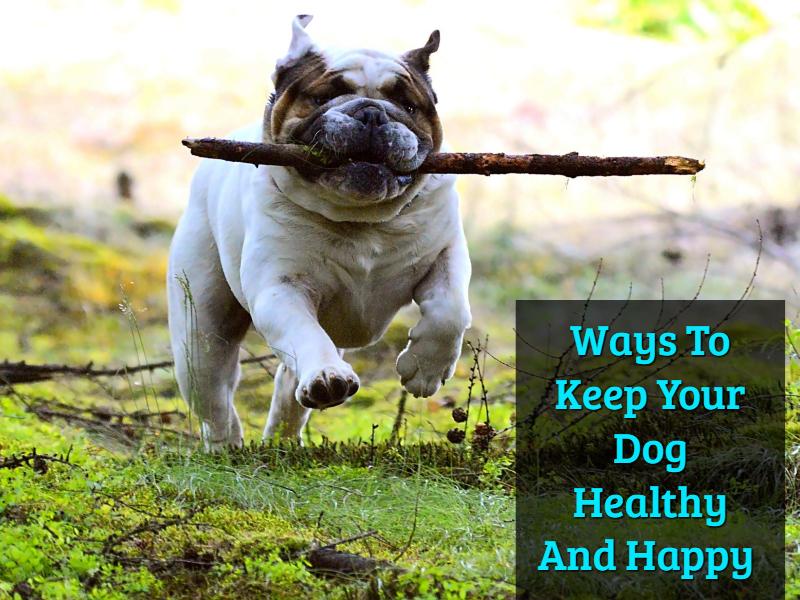 Pet Wellness Mobile Vet Clinic