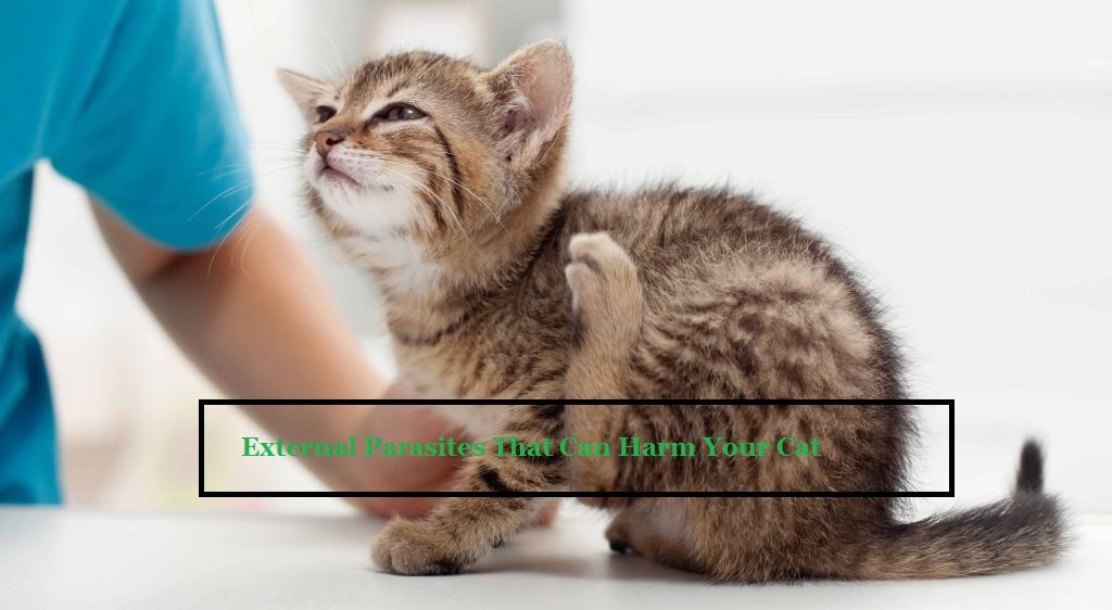 Cat Vaccination McAllen TX