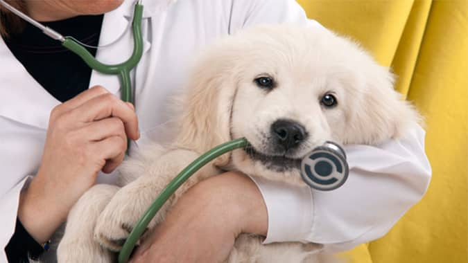 Low-cost animal clinic Mcallen TX