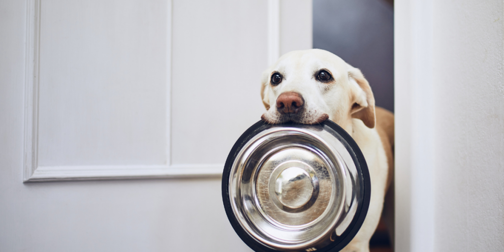 Is Raw Food a Good Idea – Are they Ideal for Dogs or a Fad that Must be Avoided