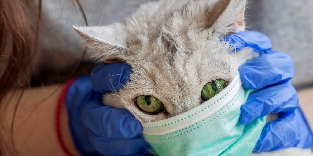 Types of Allergies in Cats